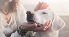 animal-reiki-dog-500x333.jpg