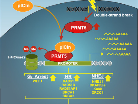 Hu lab publishes cell press paper!