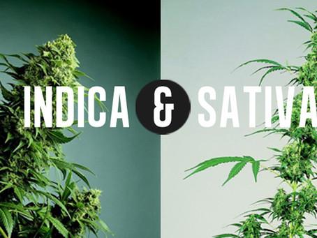 Indica? Sativa? Same! 😳