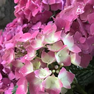 05 Hinter der Gartenpforte