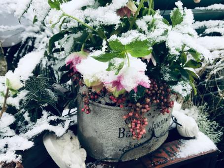 Winter-Januar 2019