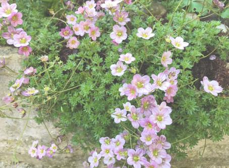 Von Mauerhelden und Mauerblümchen