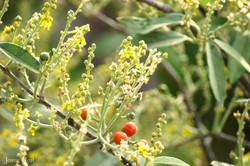 Plantas nativas 01
