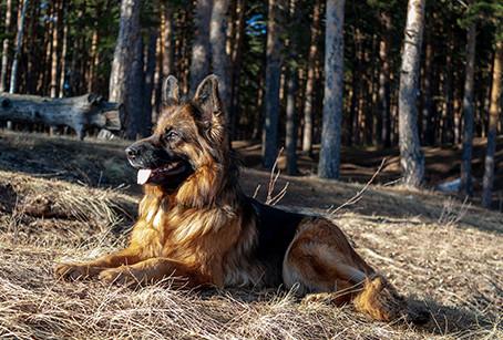 ¿Qué hacer para evitar estafas relacionadas con los perros y pedigrees?