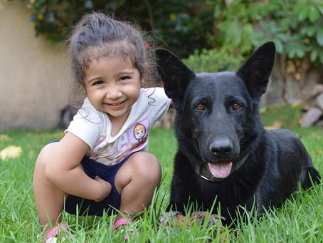 ¿Cómo conseguir la relación perfecta con tu perro?