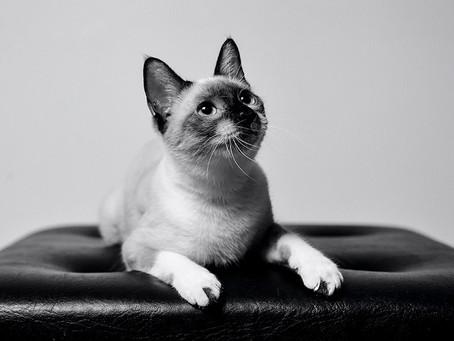 Porque todos tenemos un gato favorito, celebra su día este 8 de agosto