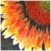 G-Sunflower w.jpg
