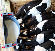 Milk Bar 5 Ezi Lock Hooks calf feeder