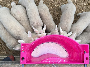 Milk Bar lamb feeder 10 teats