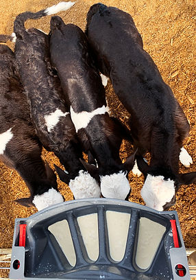 Milk Bar 4 Compartment calf feeder