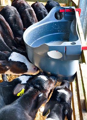 Milk Bar 10 calf feeder
