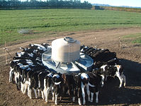 Milk Bar mobile calf feeders