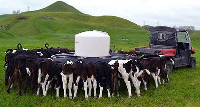 Milk Bar mobile calf feeder