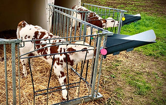 Milk Bar Vitality System calf feeder