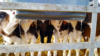 Milk Bar calf feeder