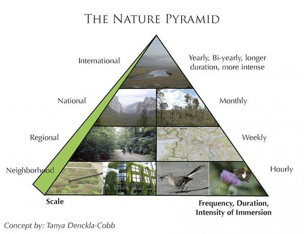 The Nature Pyramid