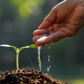 Sermon: What Have You Planted in The Kingdom? (Audio)