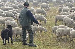 Пастух.jpg