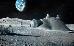 Погреб с лунными огурцами