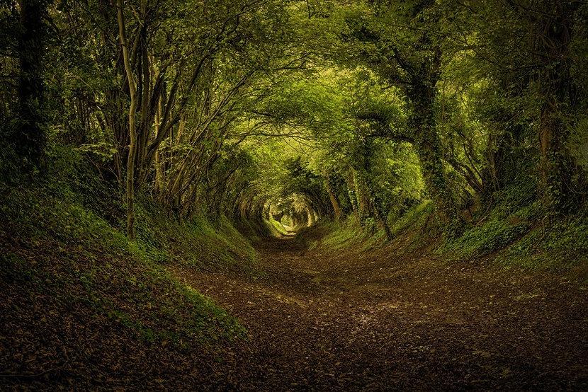 Тоннель в лесу.jpg