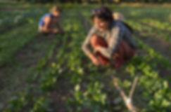 Community Farm.jpg
