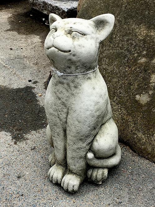 Cat Smiling  (CT5)