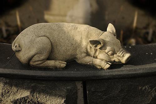Sleeping Pig B (AN2)