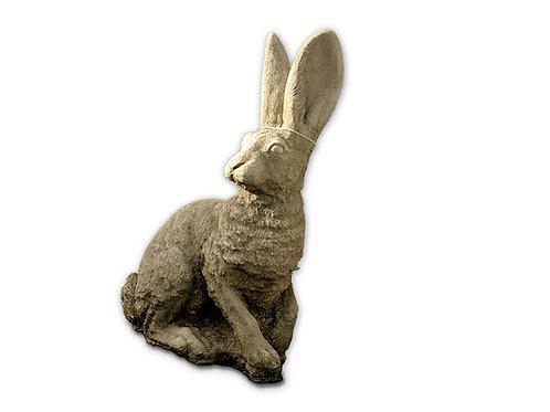 Hare  (AN23)