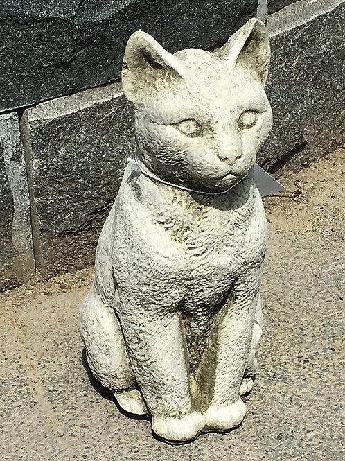 Cat Serene (CT4)