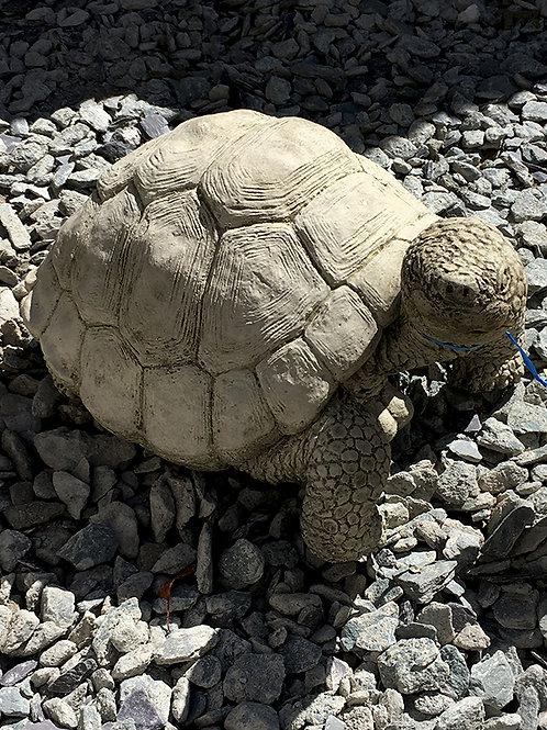 Tortoise Giant  (AN17)