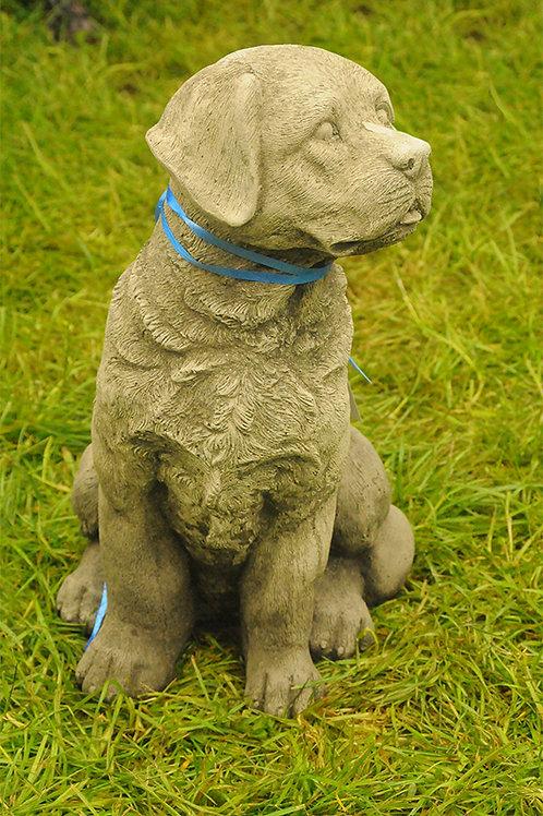 Labrador Sitting (DS10)