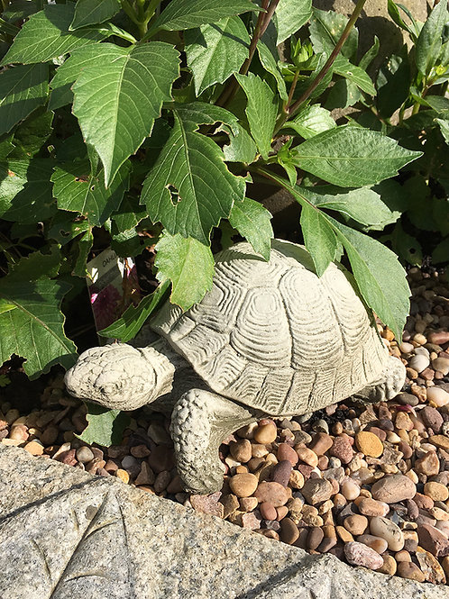 Tortoise Small  (AN16)