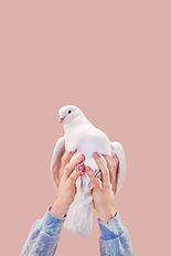 Bir Dove Holding Eller