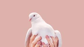 1st annual white dove release