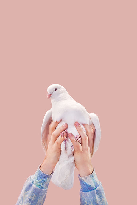 Hands Holding a Dove