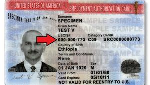 employment authorization immigration attorney lawyer massachusetts