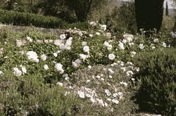 creation_jardin18