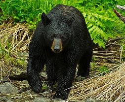 Bear Square.jpg
