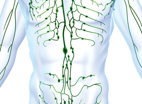 4 Ways To Naturally Support Your Lymphatic and Immune System.