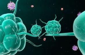 Gastro-Immunity Testing
