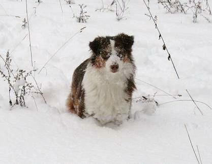 Snow_day_011.JPG