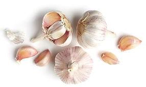 garlic-isolated-on-white-background-260n