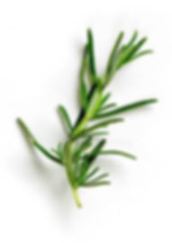 57931613-green-rosemary-isolated-on-whit