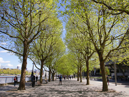Exeter Uni Research Uses Bluesky Tree Map to Investigate the Link Between Trees & Mental Health