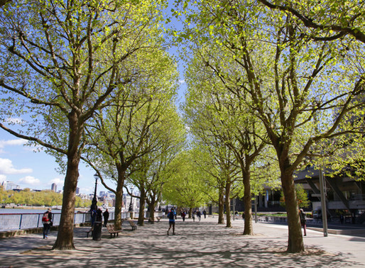 Exeter University Research Uses Bluesky Tree Map to Investigate the Link Between Trees & Mental