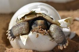 爬虫類の繁殖(2)