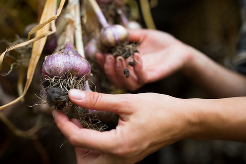 How to Grow Garlic Workshop