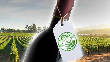 vino organico.jpg