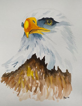 bald eagle - Copy.jpg