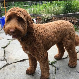 Meet Ginger